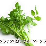 栄養満点のスーパー野菜!クレソンをもっと身近に手軽に活用しよう