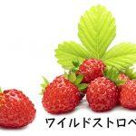 ワイルドストロベリーって食べられるの?食べ方とその効果・効能!
