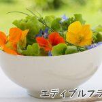 エディブルフラワーとはどんな花なの?その種類をみてみよう!