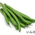 栄養満点!いんげん豆の嬉しい効能とは