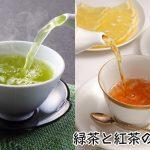 緑茶と紅茶の違いとは?烏龍茶(ウーロン茶)も同じ葉からできているの?