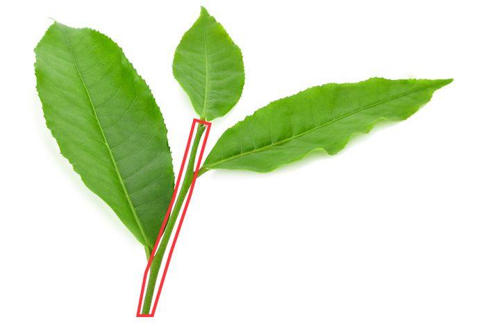 茎茶の持つ栄養や効能について | たべるご