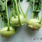 【見た目はエイリアン】畑になるコールラビの食べ方や栄養・味について