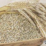 ライ麦粉とは?栄養や効果効能など
