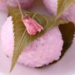 道明寺粉はつぶつぶが魅力!上手な使い方や料理の方法とは?