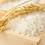 うるち米とはどんなお米?白米やもち米との違いを見てみよう