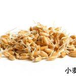 小麦胚芽とは?食べ方や栄養について
