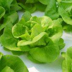 サラダ菜の保存や使い方は?栄養についても知っておこう