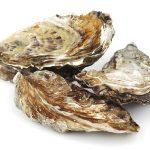 牡蠣が美味しい旬のシーズンっていつ?牡蠣の有名な産地も