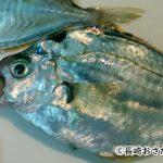ヒイラギを使った美味しい魚料理とは?価格や調理法も