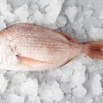 真鯛(マダイ)の旬な時期と値段や天然と養殖の見分け方