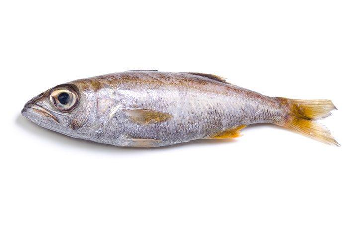 ムツ(幼魚)