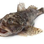 カジカという魚の料理。味噌汁や肝和え・卵の醤油漬けなど