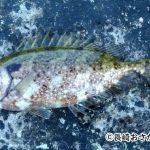 アイゴという魚は毒に要注意!上手な調理の仕方とアイゴの料理をご紹介