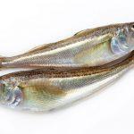 ハタハタは魚料理初心者に最適!ハタハタの美味しい食べ方や旬の時期