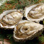 岩牡蠣の上手な開け方!岩牡蠣の美味しい食べ方
