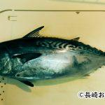 スマという魚はどんな味?スマの刺身はカツオやマグロに劣らず絶品