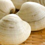 ホンビノス貝の食べ方は?ハマグリと書いてあるその貝…実はホンビノス貝かも?