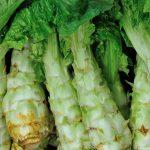 茎レタスの食べ方と栄養について