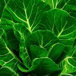 カラードグリーンとは?栄養満点なソウルフードの効果はどんなもの?