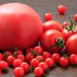 小さくても味が濃厚なマイクロトマトとは?極小トマトの食べ方や栄養・育て方まで
