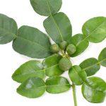 バイマックルー(コブミカンの葉)
